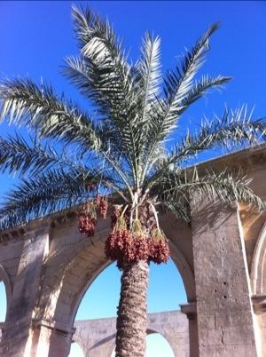 Random date palm in the sunshine
